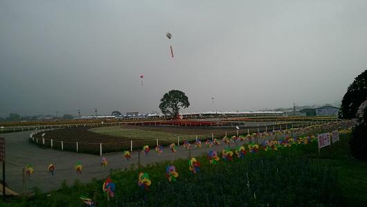 IMAG3313
