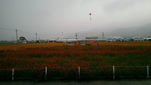 IMAG3320