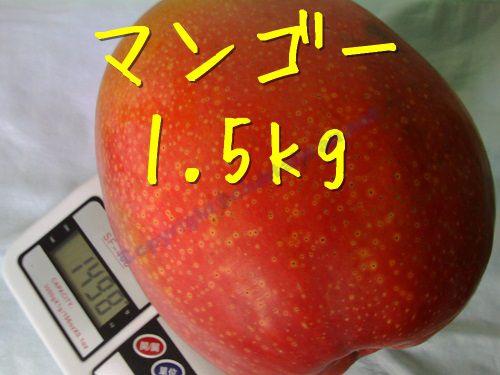 台湾のマンゴー‐1.5kgの巨大サイズ